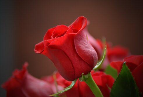 Как выбрать букет цветов: выбираем композицию для девушки, Дня рождения