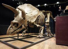 В Бельгии скелет огромного динозавра ушел с молотка за огромную сумму